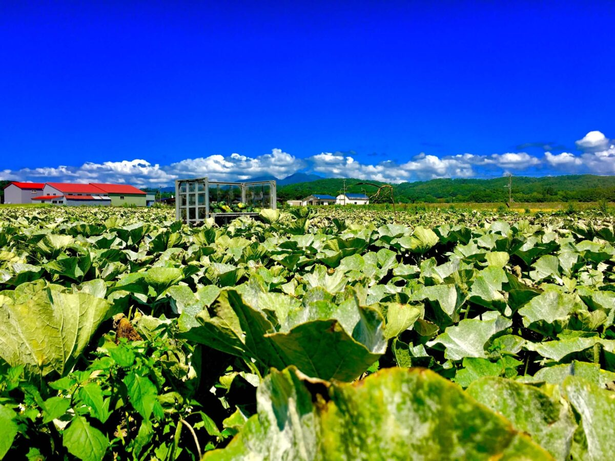 農業アルバイト